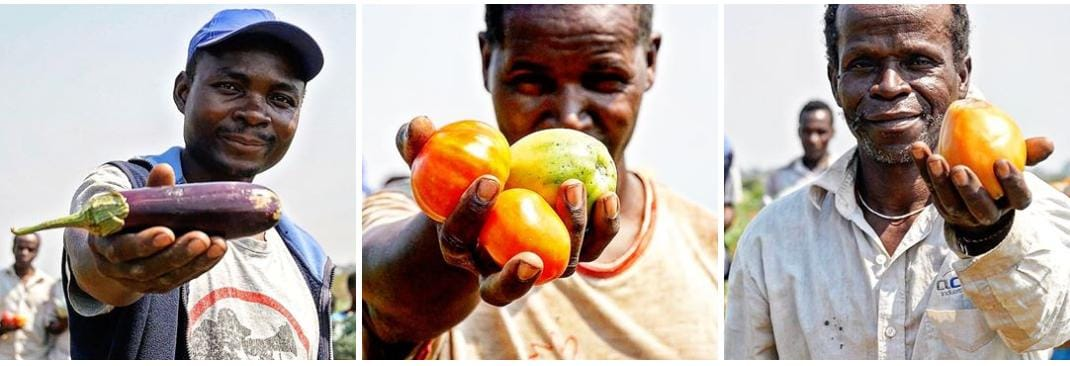 La soberanía alimentaria mozambiqueña