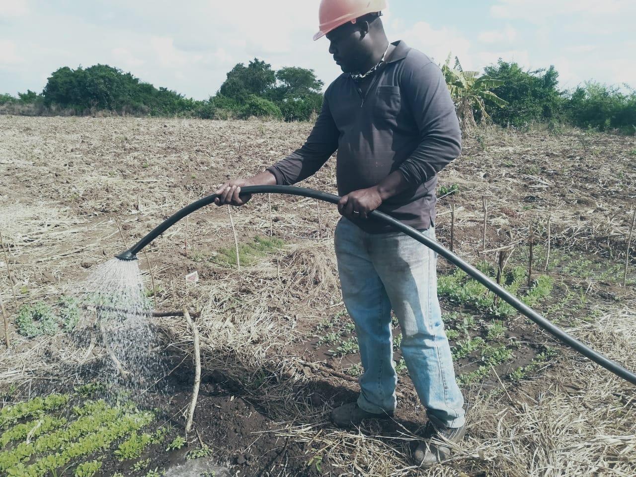 Sistemas Alimentarios Locales Sostenibles