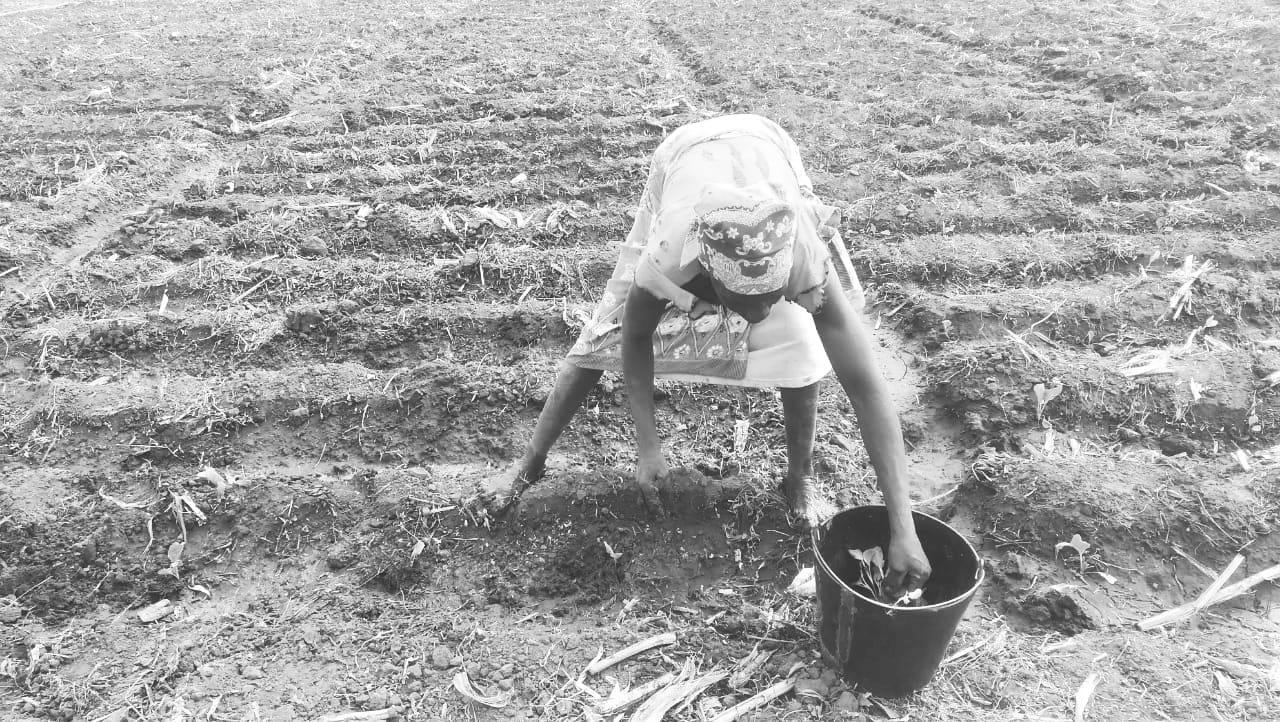 Una mujer agricultora mozambiqueña trabajando la tierra