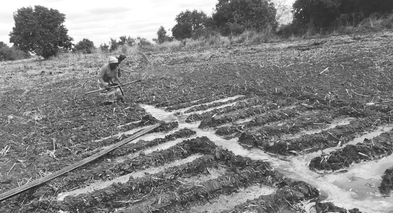 Mujeres agricultoras mozambiqueñas trabajando en el campo