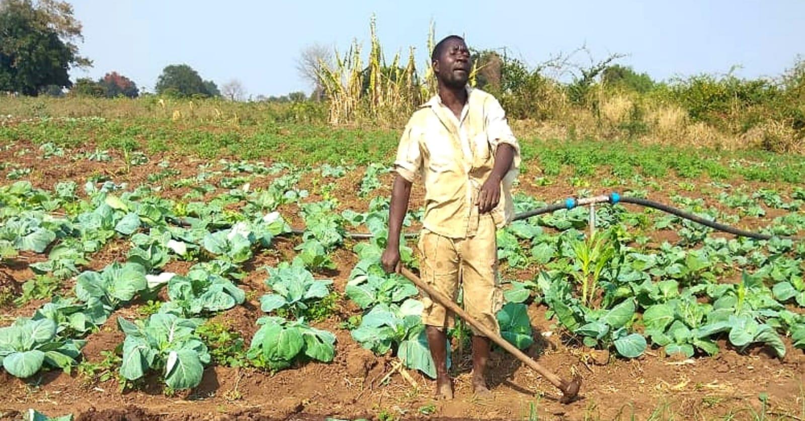 Consumo agroecológico: más sano y sostenible