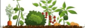 produccion-azada-verde-desarrollo-sostenible-mozambique